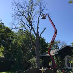 Tree Service using Spider Lift