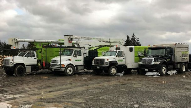 St. Catharines Tree Service Trucks