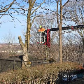 Confined Space Tree Service