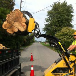 St. Catharines Tree Service Skidsteer Removing Stump