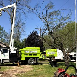 St. Catharines Tree Service Special Equipment and Stump Grinder