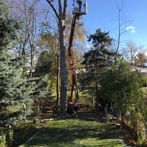 Spider Lift Tree Service